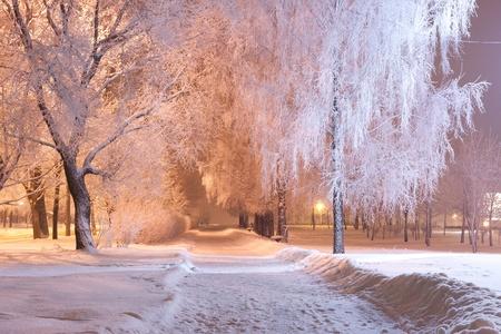 snowy background: paisaje nocturno de invierno