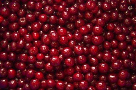 Sweet cherries, fresh and red