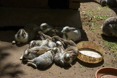 Group of gray bunnies in one place. Stock Photo
