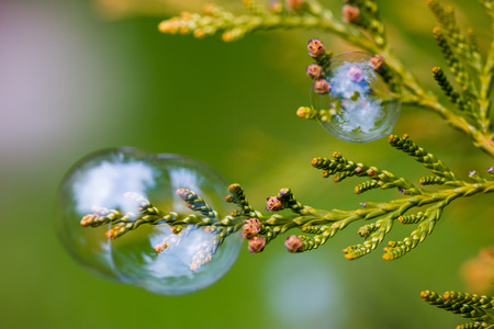 Soap bubbles caught on the branches of green bush.