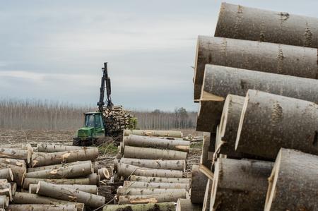 gatherer: Cutting of poplars, crane log and woodpiles