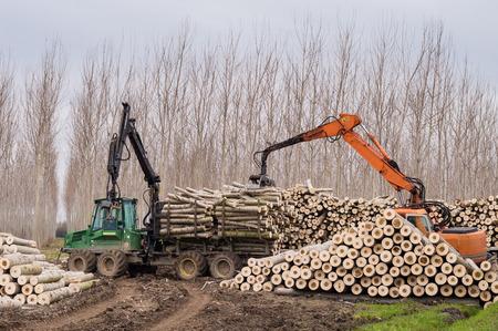 forwarder: Cutting of poplars, crane log and woodpiles