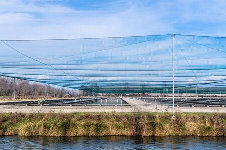 fish breeding: Breeding of fish farms, tanks and protective nets Stock Photo