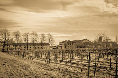 Vintage effect. Agricultural Landscape with vineyard and farm house in the background. photo