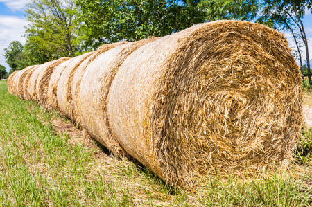 hay bales: Hay bales in line drying in the sun Stock Photo