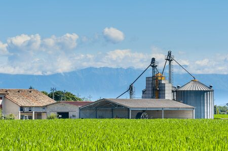 mais: Agricultural landscape,field of mais,farm and silos Stock Photo