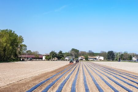 rooted: Agricultural work: preparing the fields for planting the rooted grafts of the screws