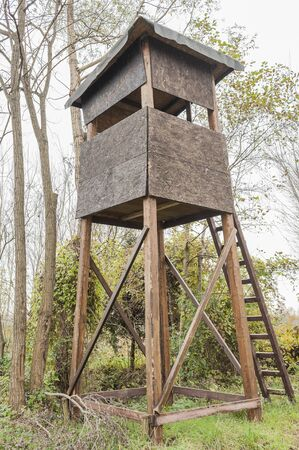 observer: Raised shed hunting for deer in the middle of a forest of poplars.