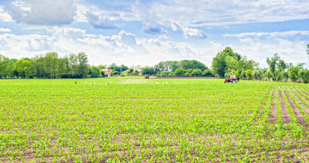 fertilize: Green field of young corn with tractor fertilizes and blue sky with clouds