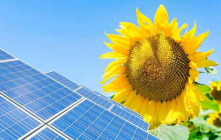 panels: photomontage with solar panels and sunflower flower