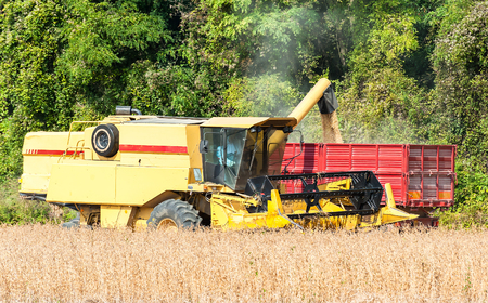 Overloading grain harvester machine into the soy tank of the tractor trailer