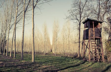 hunter's cabin: Raised hunting shed. Hunt Tower for deer in forest of poplars. Photo in vintage style.