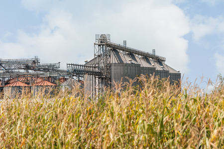Countryside Scenery. Set Of Agricultural Storage Silos , In Foreground  Plants Of Corn. Stock