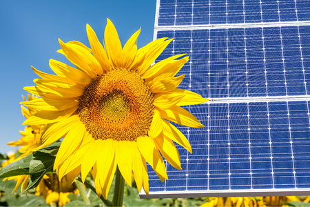 Photomontage with solar panels and sunflower flower