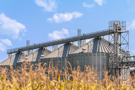 Agricultural Storage Tanks. Silos For Storing Cereals. Countryside Scene.  Stock Photo   88841206