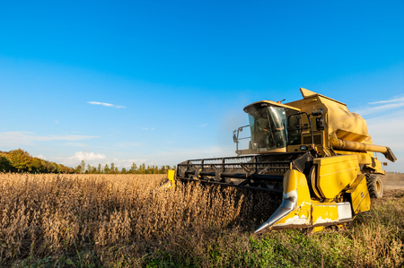 Harvesting of soybean field with combine harvester. Yellow thresher. Stock Photo