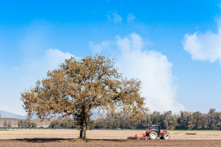 Agricultural landscape with a tree and tractor plowing the field with harrow.