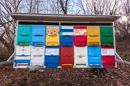 Hives of bees in the apiary.