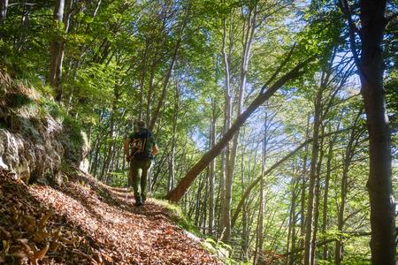 Hiker walking on trail in the forest. Zdjęcie Seryjne