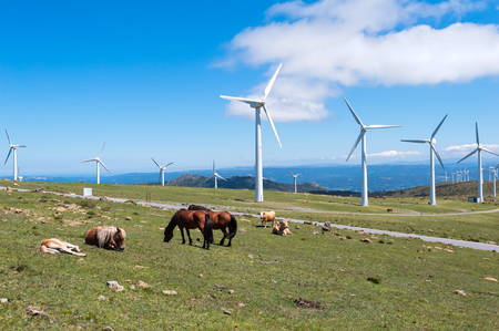 Landscape with horses, wind turbines for electric power generation, blue sky and clouds. Galicia, Spain. Zdjęcie Seryjne