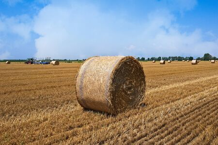 Wheat field after harvest with straw bales. Standard-Bild