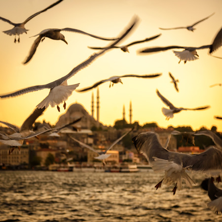 istanbul: Seagulls over the Golden Horn in Istanbul at sunset, Turkey