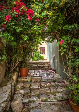 Old narrow street with flowers in Plaka district, Athens, Greece. Plaka is one of the main tourist attractions of Athens. Scenic beautiful alley like overgrown tunnel in the Athens city center.