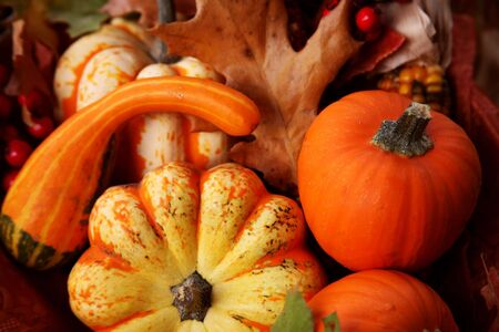 Thanksgiving Harvest Basket with Pumpkins, Berries, and Gourds Stock Photo