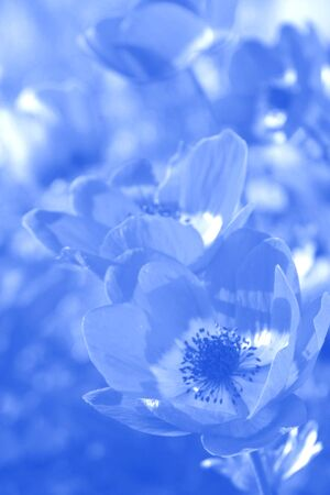 Soft Blue Floral Background