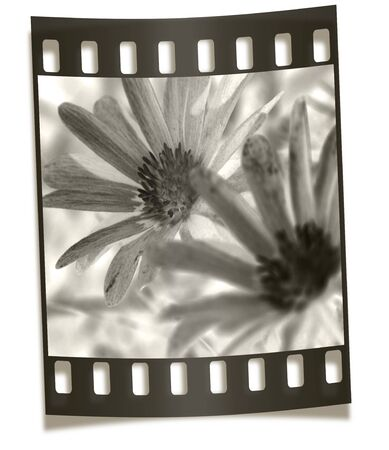 Filmstrip Negative Illustration - Flower Macro