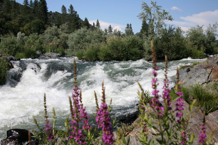 the rapids: Rogue River Oregon - Class 4 Rapids