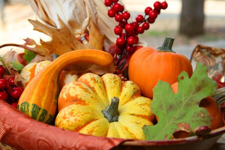 erntekorb: Colorful Thanksgiving Ernte Warenkorb legen