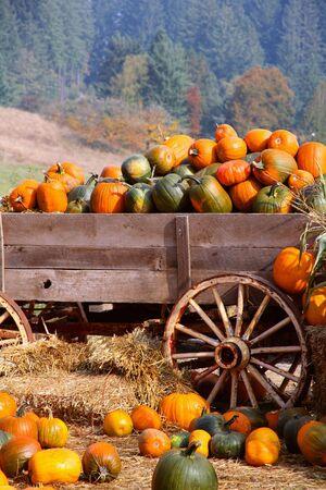 Harvest Pumkpin Festival