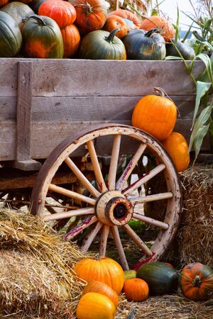 Wagon Full of Pumpkins