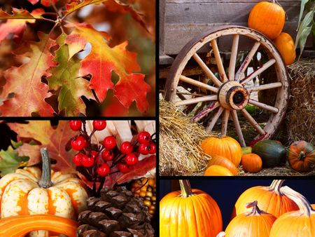 Colorful Thanksgiving Harvest and Fall Collection Stock Photo