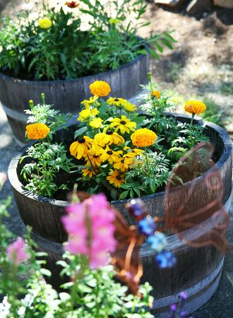 Oak Barrel Flower Garden Stock Photo