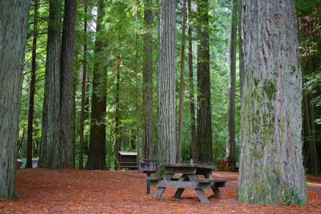 campground: Campground Picnic Table in Redwood Forest Stock Photo