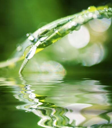 Water Beads on Blade of Grass Reflecting in Water photo