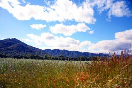 hay field: Fieno campo pronto per la mietitura  Archivio Fotografico