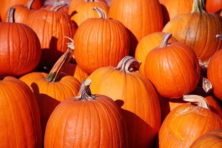 Pumpkins Piled Up Halloween Background 스톡 콘텐츠