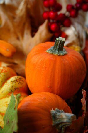 erntekorb: Colorful Thanksgiving Harvest Basket mit Mini-Pumpkins