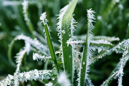 Frost Covered Blades of Grass Macro Imagens