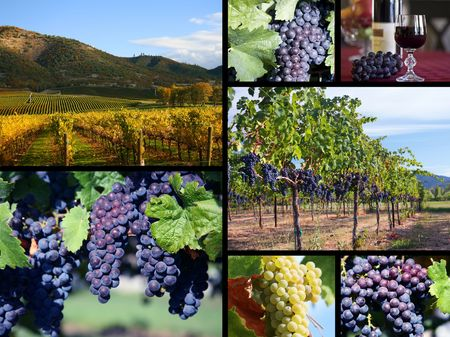 wine country: Vineyard Collage Stock Photo