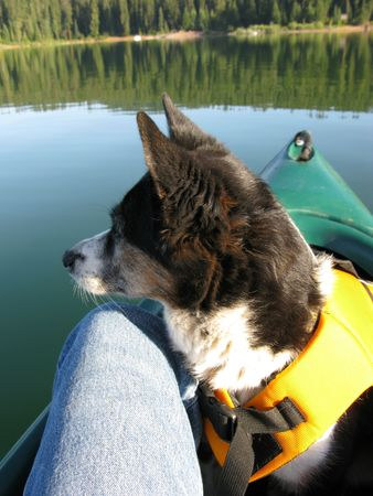 lake front: Canoe on lake with dog in front wearing a Life Jacket
