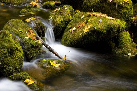 Water Cascading over Green Moss covered Rocks with Fall maple Leaves Stock Photo