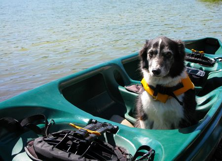 Border Collie Dog in Canoe Wearing a Life Jacket
