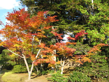the autumn trees in Kyoto photo
