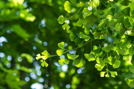 early summer: The fresh green of early summer