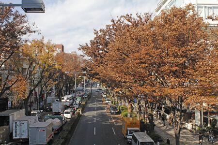 harajuku: Harajuku Stock Photo