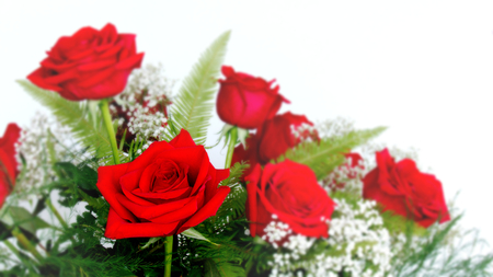 Beautiful Red Roses - Rosaceae Rosoideae Rosa - Arranged with White Babys Breath for Valentines Day